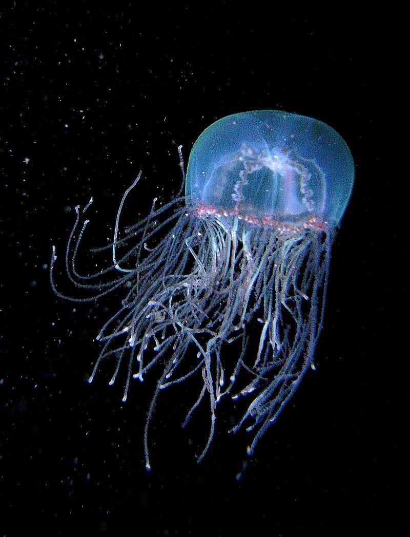 Ожог медузы: первая помощь и рекомендации по лечению