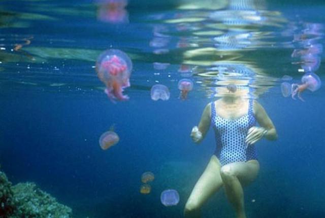 Аллергия от медуз