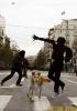 Собака революционер
