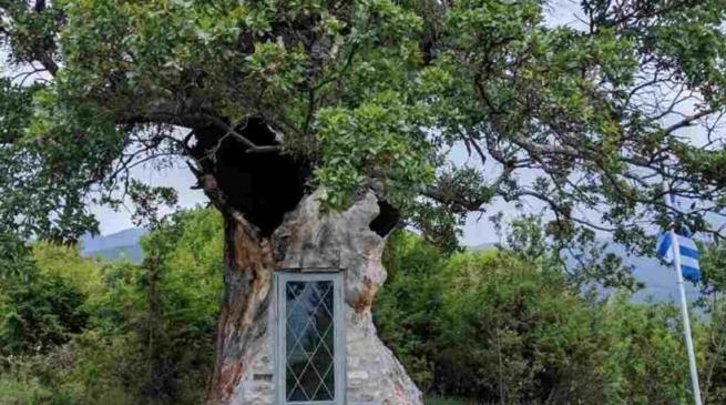 Невероятная церковь, уместившаяся в стволе дерева