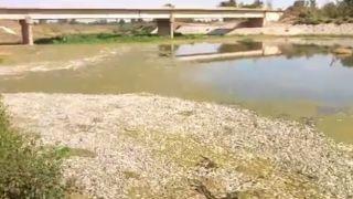 Греция: Мертвая рыба заполнила берега Пиниоса