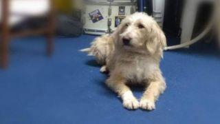 Собака-талисман футбольного клуба Астерас - отравлена