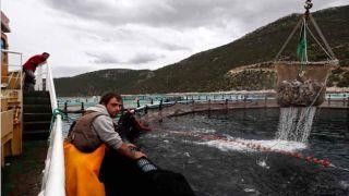 Компании из Эмиратов приобретут мажоритарные доли в греческих рыбопромышленных фирмах