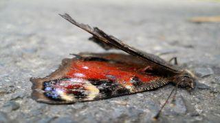 Птицы и бабочки безвозвратно исчезают с лица Земли