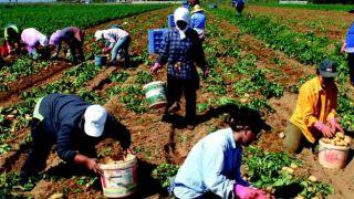Мигрантам - аграрникам предоставят вид на жительство