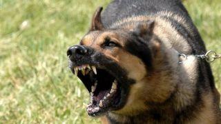 Шок от нападения собаки на 11-летнего мальчика на Эвии