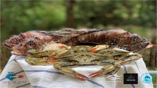 «Съешь это прежде, чем съедят тебя» — гастрономический фестиваль морепродуктов