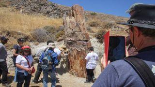 Окаменелости леса с острова Лесбос обнаружены в багаже туриста