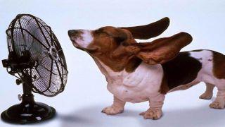 Осторожно, жара: с 1 июля температура в Афинах поднялась выше 37°С