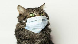 Коронавирус обнаружен у кошек в Ухане