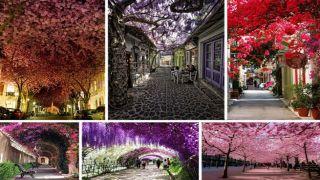 В рейтинг самых красивых улиц мира попали греческая и российская