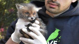 Эллинико: лисы, кошки, черепахи и ежи эвакуируются с места строительных работ