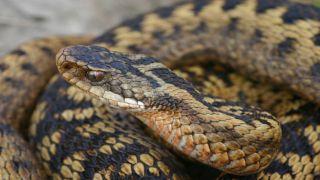 Греция: 200 укусов змей в год