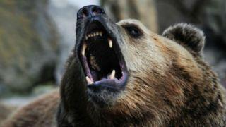 Греция: бурый медведь задрал фермера, а семья требует компенсации
