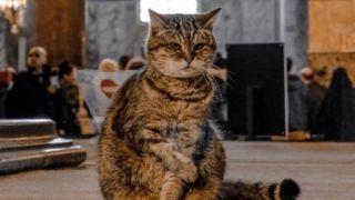 Заболела кошка Гли из Святой Софии