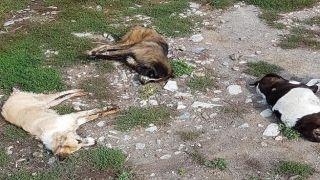 Общество охраны природы осуждает массовое отравление собак во Флорине