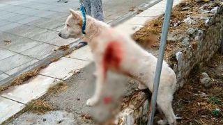 Суд по жестокому обращением с животными перенесен на 6 ноября