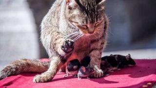 США: улицы  «самого крысиного» города взяли под контроль кошки