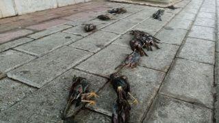 Циклон Талиа: десятки мертвых птиц на улицах Халкиды