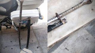 В Салониках арестовали грузина с самурайским мечом