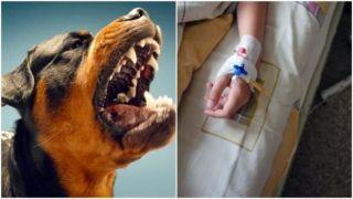 Ребенка чуть не растерзали собаки бойцовской породы