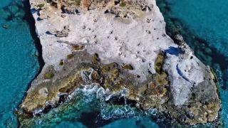 Единственный в Европе окаменелый пальмовый лес находится в Греции