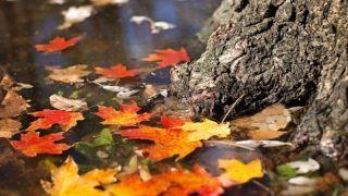 Осеннее равноденствие знаменует конец лета