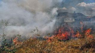 Возле Мани вспыхнул лесной пожар,  а в Аспропирго его завершают тушить.