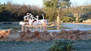 Зоопарк в Спате