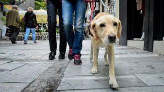 Салоники: Контроль ΕΛΑΣ домашних и бездомных животных