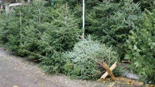 Салоники: штрафы за выброшенные на улицу елки