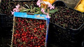 Рекорд экспорта греческой вишни