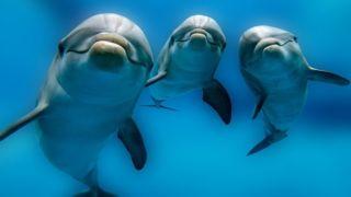 Коринфос: Дельфины порадовали туристов