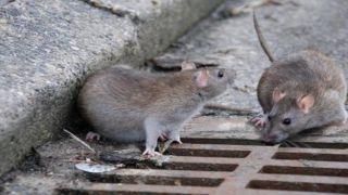 Мышь ребенку - не товарищ!