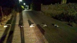 Маньяк убивал кошек и раскладывал их на дороге