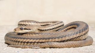 Салоники: Змея напугала горожан
