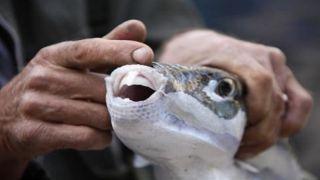 Рыба-кролик: Пришла беда - отворяй ворота