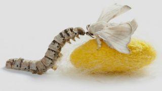 Целебная Греция: заморить червячка