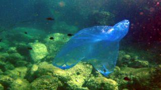 Экологический налог на все пластиковые пакеты, без каких-либо исключений