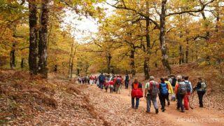 Осенняя сказка: дубовый лес на Пелопоннесе