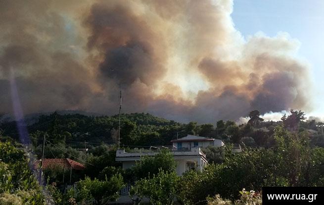 Лесные пожары разбушевались вГреции, Португалии иФранции