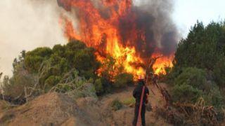 Пожар на Хиосе уничтожил ценные деревья мастихи