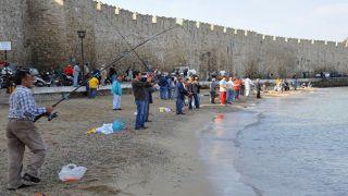 Тысячи морских карасей у берегов Родоса